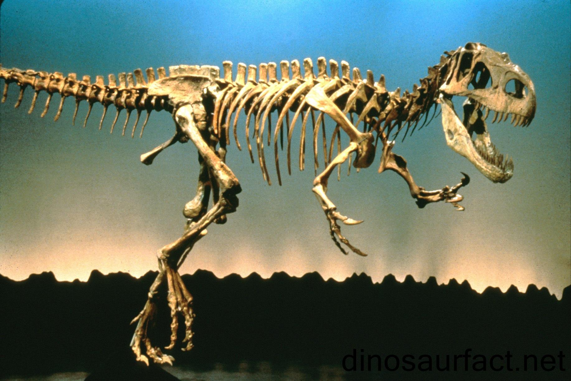 AfrovenatorDinosaur