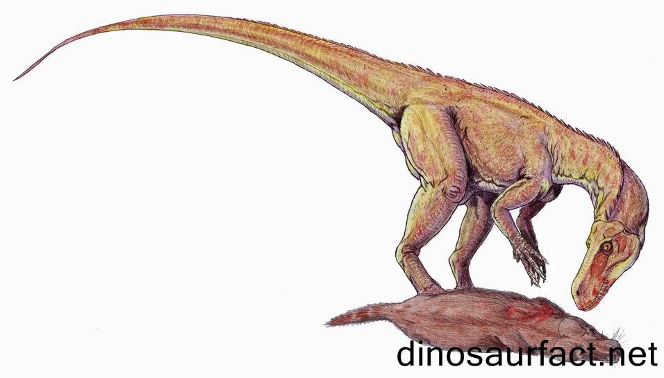 Alwalkeria Dinosaur