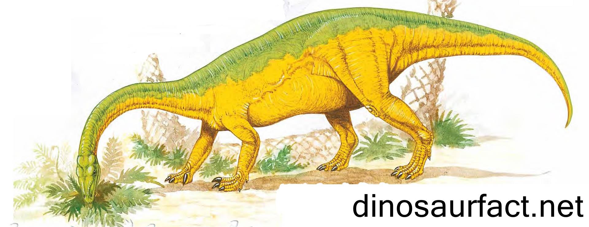 Anchisaurus Dinosaur
