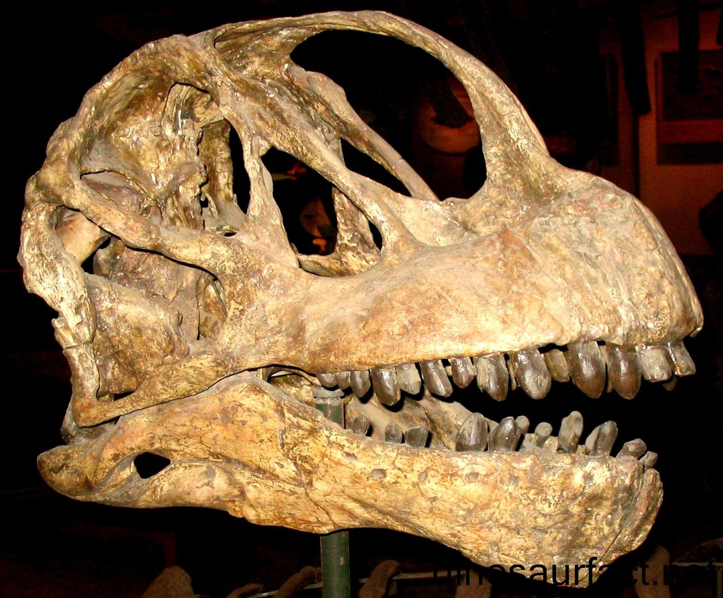 Asylosaurus Dinosaur
