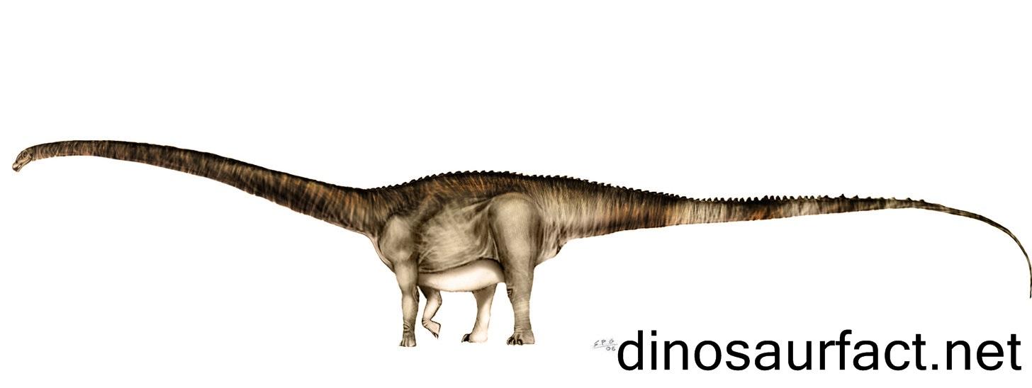 Barosaurus2.jpg
