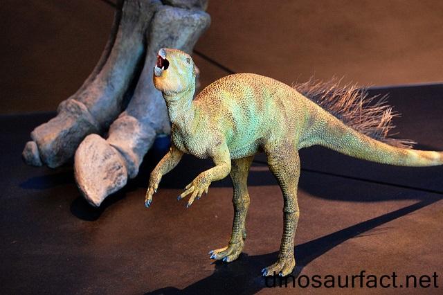 Camposaurus dinosaur