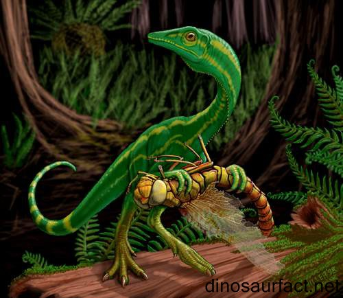 Compsognathus Dinosaur