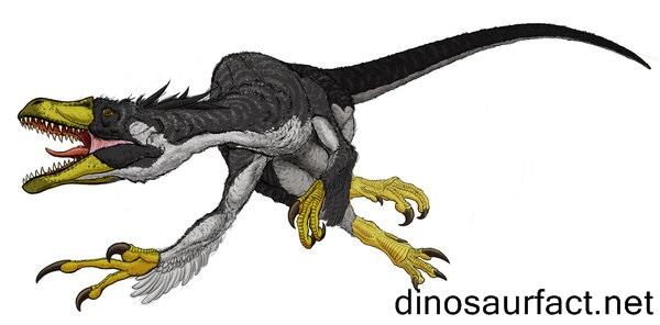 Dromaeosaurus Dinosaur