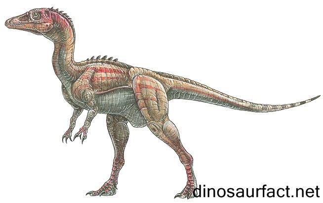 Eoraptor Dinosaur