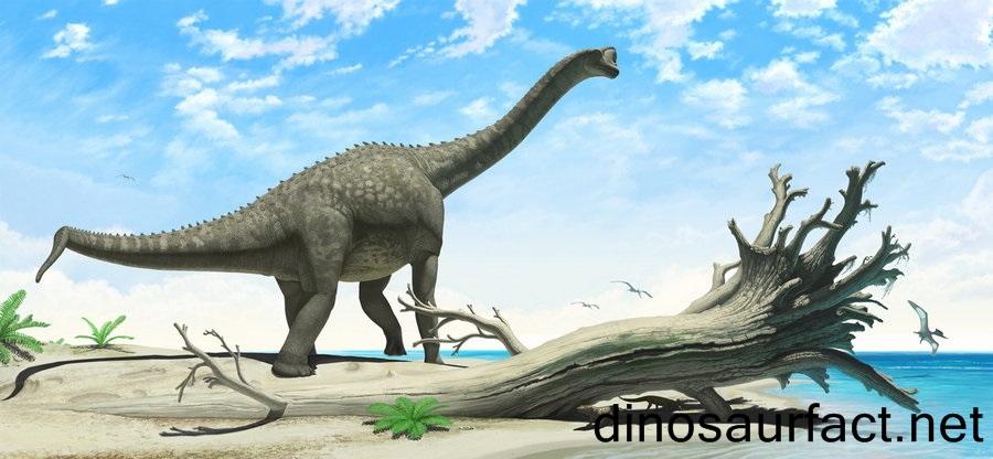 Europasaurus2.jpg