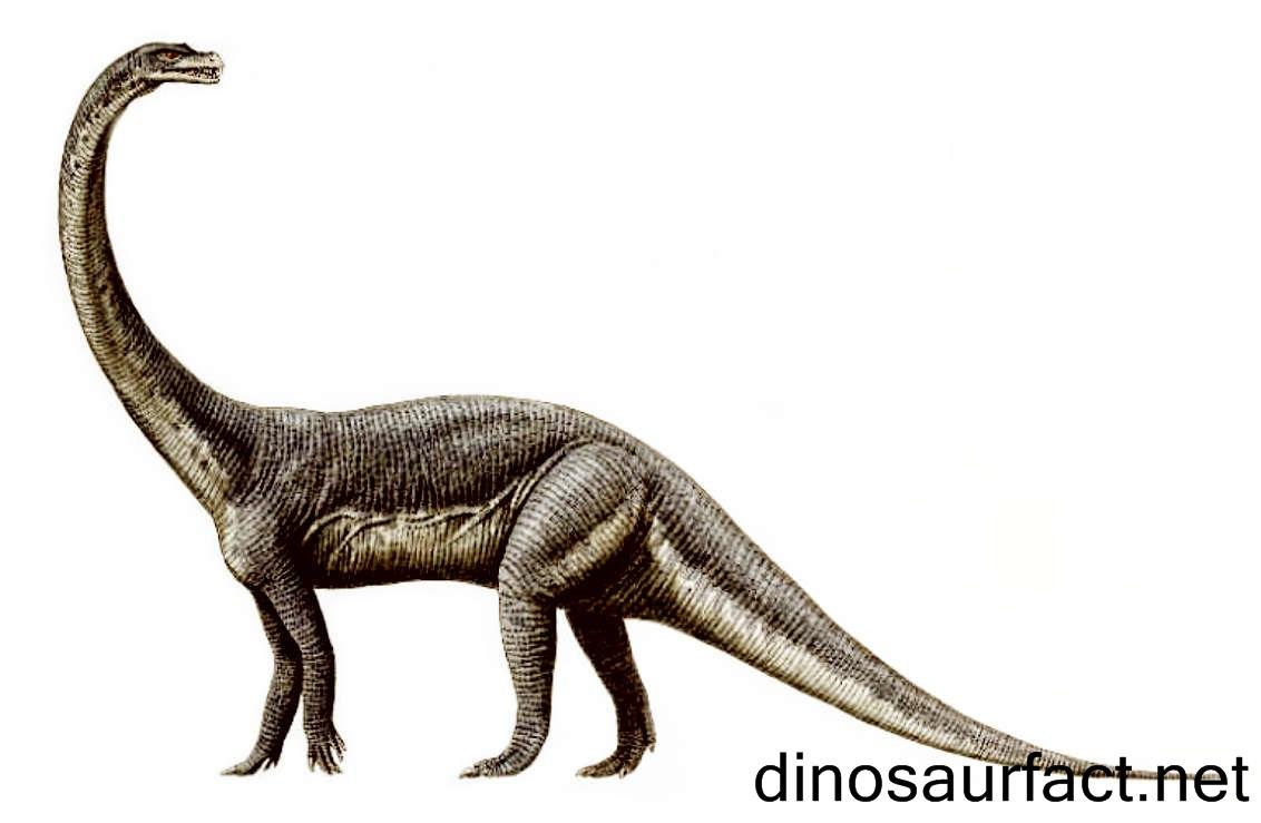 Euskelosaurus Dinosaur
