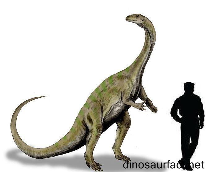 Melanorosaurus dinosaur