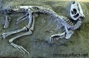 Nanosaurus Dinosaur