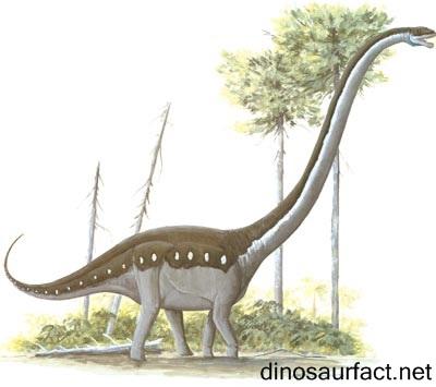 Omeisaurus Dinosaur