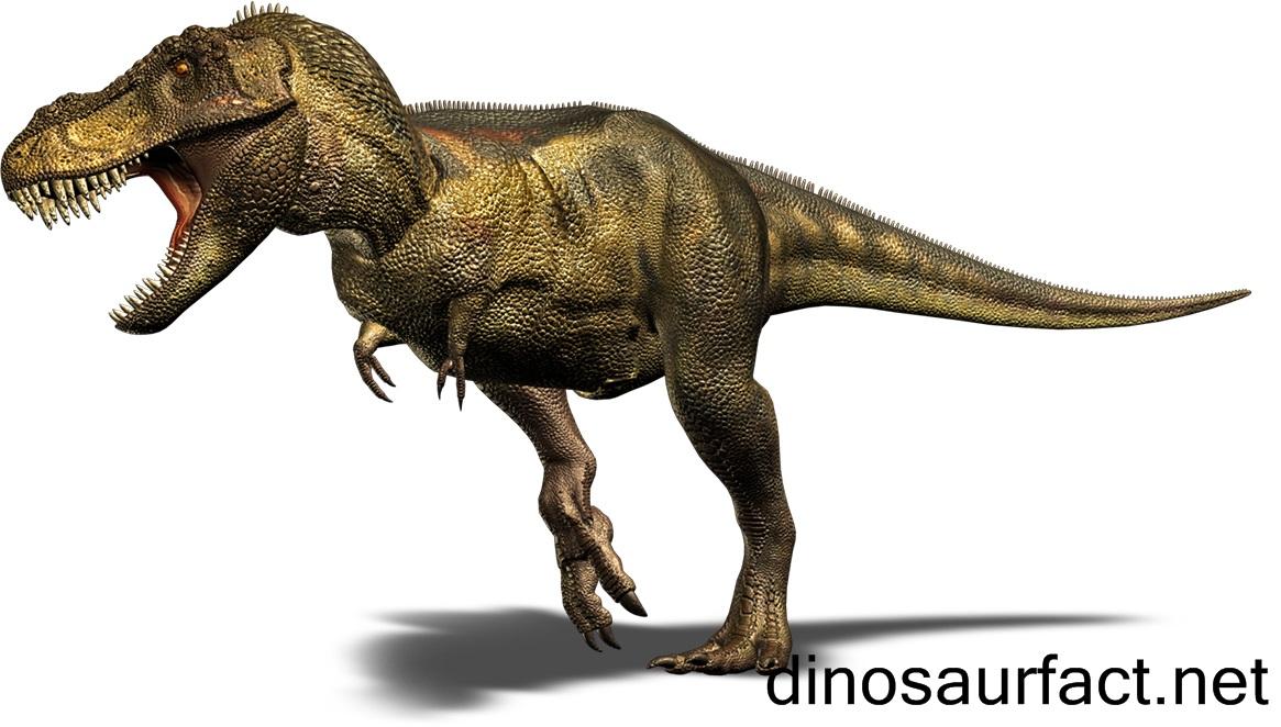 Tyrannosaurus dinosaur altavistaventures Gallery