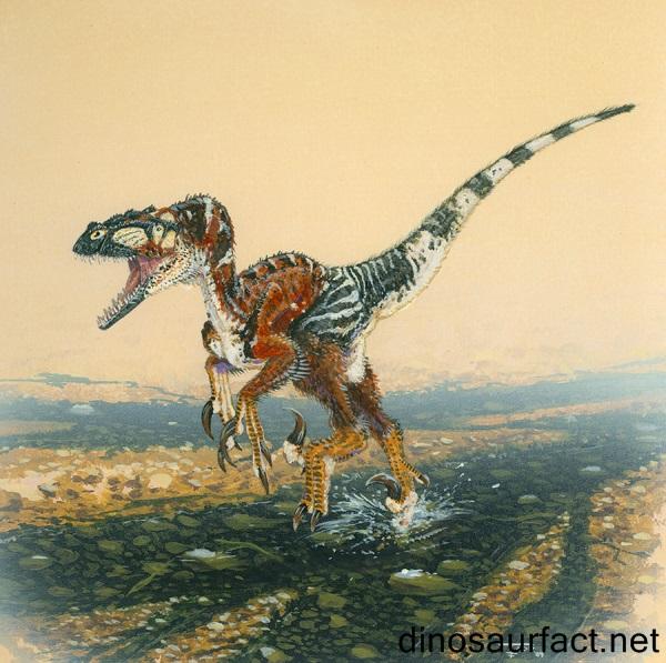Utahraptor Dinosaur