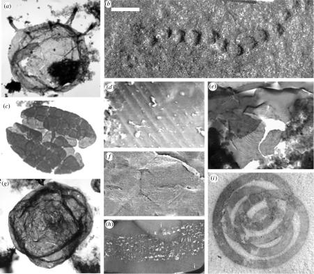 Mesoproterozoic Era